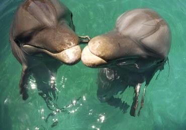 Rosyjska armia kupuje delfiny. Na wojnach były już foki, gołębie, a nawet mastify