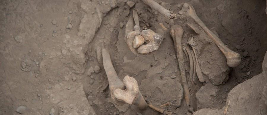 """Szczątki czterech osób, najprawdopodobniej ofiar komunistycznego terroru, odnaleziono w Zgórsku koło Kielc - poinformował prezes Fundacji Niezłomni im. Zygmunta Szendzielarza """"Łupaszki"""", Wojciech Łuczak. Nie jest to pierwsze tego typu odkrycie w tym miejscu - ciała odnaleziono bowiem w jamie grobowej położonej 70-80 metrów od miejsca, w którym w grudniu ubiegłego roku odkryto szczątki dwóch innych ofiar egzekucji."""