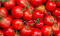 Zielona energia z zepsutych pomidorów