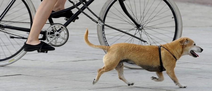 We Włoszech pies, który padł ofiarą błędu medycznego, wygrał w sądzie z weterynarzami- tak media podsumowują pierwszy taki proces w tym kraju. Sąd w Genui nakazał weterynarzom zapłacić 4500 euro odszkodowania właścicielce suczki o imieniu Yuma za nieudaną operację.