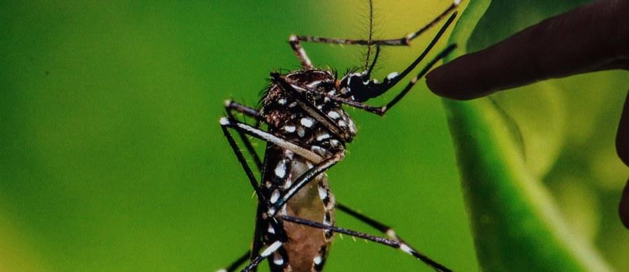"""Światowa Organizacja Zdrowia (WHO) ostrzegła, że liczba zakażeń wirusem Zika może wzrosnąć w """"sposób znaczący"""" w nadchodzących miesiącach w częściach świata, które dotychczas nie miały z nim do czynienia, głównie w Europie."""