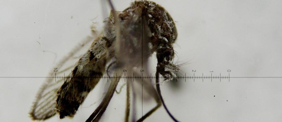 Rusza wojna z komarami tygrysimi na Francuskiej Riwierze. Władze obawiają się bowiem epidemii przenoszonego przez te owady wirusa Zika.