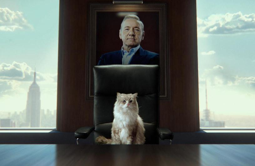 """Kto mógłby wiedzieć lepiej, """"Jak zostać kotem"""", jeśli nie Tomasz Kot?! Najpopularniejszy krajowy aktor gra pierwsze... wąsy w dubbingu najnowszej komedii Barry'ego Sonnenfelda, gdzie w dwóch wcieleniach (ludzkim i kocim!) zastępuje samego Kevina Spacey'ego."""