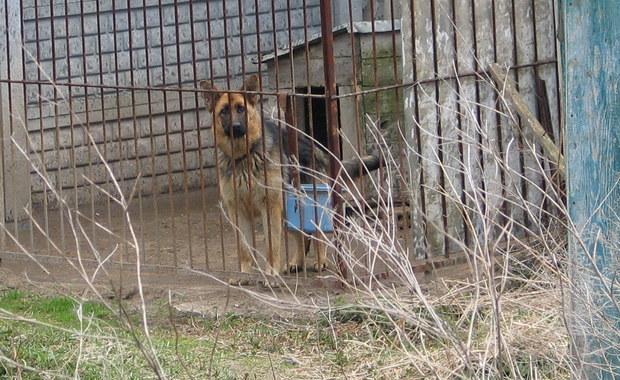 Rok i cztery miesiące w zawieszeniu na 2 lata – to wyrok dla Jerzego G., właściciela psów ze Skierniewic w Łódzkiem, którego zwierzęta bardzo dotkliwie pogryzły 59-letnią kobietę. Mężczyzna będzie musiał również zapłacić nieco ponad 12 tysięcy zł pokrzywdzonej.