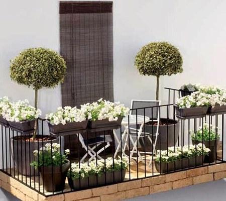 Jakie Kwiaty Na Balkon I Okna Forum Mobilna Interiapl