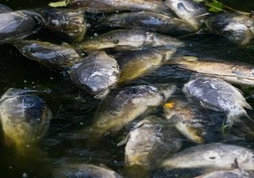 Zatruli Wartę, zginęły tony ryb. Zarzuty dla czterech osób