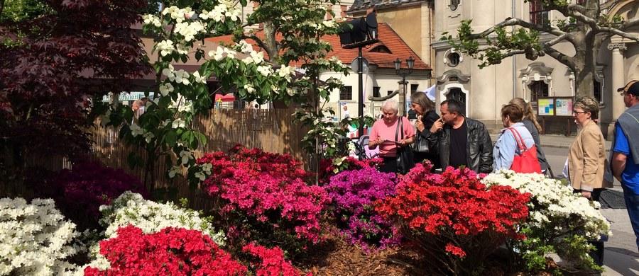 Około 15 tysięcy roślin w kilkuset odmianach zdobi w ten weekend rynek w Pszczynie. Zamienił się on w piękny, pachnący ogród, bo trwają tam Daisy Days, czyli dni poświęcone najsłynniejszej mieszkance pszczyńskiego zamku - księżnej Daisy.