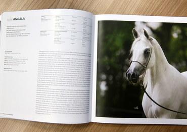 Pride of Poland z katalogiem koni. Z aukcji wycofali się ważni klienci, ale 'spore zainteresowanie'