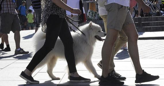 """""""Traktujemy zwierzaki jako członków naszej rodziny. Pies jest przyjacielem człowieka, ale człowiek jest też przyjacielem psa"""" - mówi gość """"Dania do Myślenia"""" w RMF Classic, lekarz weterynarii z kliniki Medicavet Katarzyna Kacprzak-Kamińska. Dodaje, że pies w swoim rozwoju osiąga dojrzałość 3 letniego dziecka. """"Psy odczuwają emocje, ale to emocje niższego rzędu: empatia, przywiązanie, poczucie bezpieczeństwa. Mają potrzebę bycia blisko człowieka, bo wtedy mają wtedy poczucia większego szczęścia"""" - podkreśla weterynarz. Kacprzak-Kamińska przywołuje badania, które wskazują, że po zabawie - u psów - zwiększa się hormon oksytocyny o 60 procent. U kotów zaledwie o 10 proc."""