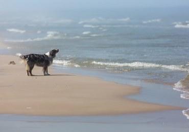 Obrońcy praw zwierząt walczą o wstęp psów na plaże