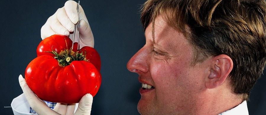 """Ministerstwo Środowiska chce zakazać upraw roślin modyfikowanych genetycznie na terenie całego kraju. Ale Ministerstwo Rolnictwa nie zamierza zamykać naszych granic dla importu pasz z takich roślin - czytamy w poniedziałkowym wydaniu """"Dziennika Polskiego""""."""