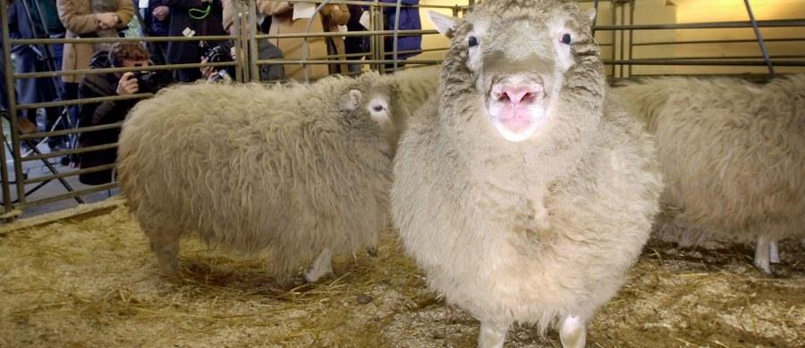 """5 lipca 1996 roku, przed 20 laty, przyszła na świat owieczka Dolly, pierwszy ssak, którego sklonowano z komórek somatycznych. Urodziła się w Instytucie Roslin we wsi Roslin pod Edynburgiem. Była to zasługa prof. Keitha Campbella i prof. Iana Wilmuta, szefa instytutu. """"Nikt nie wierzył, że to nam się uda, i że jest to w ogóle możliwe"""" – powiedział prof. Campbell podczas pobytu w Polsce pod koniec lutego 2012 roku na spotkaniu w Centrum Nauki Kopernik w Warszawie."""