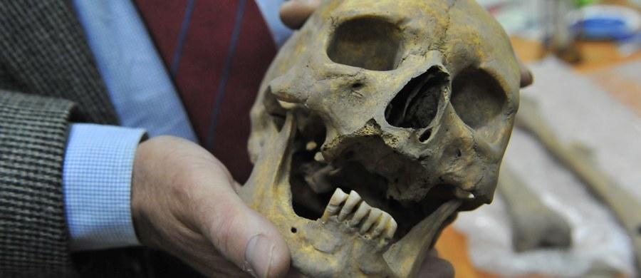 Szkielet mężczyzny, który zdaniem naukowców za życia był uznany za wampira, można już oglądać w muzeum w Kamieniu Pomorskim (woj. zachodniopomorskie). Cegła w jego ustach i uszkodzenia kości świadczą, że budził on strach wśród mieszkańców miasta.