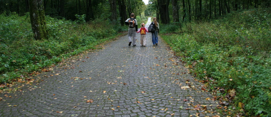 Czteroosobowa rodzina wczasowiczów zatruła się muchomorem sromotnikowym. Przyjechali ze Świętokrzyskiego. Urlop spędzali koło Mielna nad Bałtykiem.