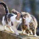 Umaszczenie kota ma wpływ na jego charakter?