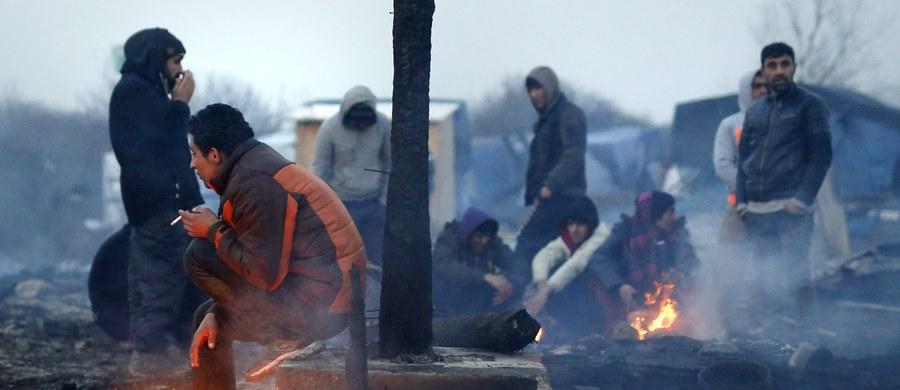 """Zwane """"dżunglą"""" obozowisko dla migrantów w Calais na północy Francji liczy już 9 tys. osób, o 2 tys. więcej niż w lipcu - podają w piątek organizacje pozarządowe. Migranci regularnie napływają do Calais w nadziei na przedostanie się do Wielkiej Brytanii."""