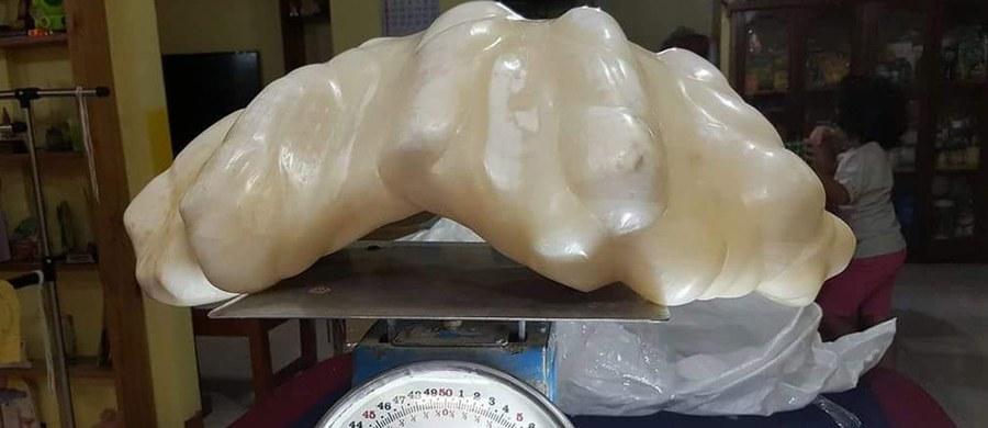 Na Filipinach odkryto największą perłę świata. Waży 34 kilogramy, a wytworzył ją największy małż świata, zwany przydacznią olbrzymią.
