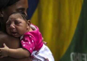 Lek na tasiemce pomoże w walce z wirusem Zika?