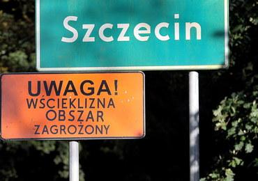 """Wścieklizna w Szczecinie. """"Nie dotykać wiewiórek, jeży, ani nietoperzy"""""""