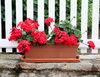 Co zrobić z kwiatami balkonowymi w zimie?