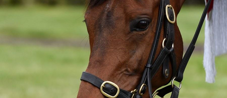 Brytyjka walczy w sądzie o konia. Decyzją władz szkockiej wyspy Lewis, został on usunięty z jej domu, w którym mieszkał na parterze. Brytyjczycy znani są z zamiłowania do zwierząt, ale takiego przypadku jeszcze nie odnotowano.
