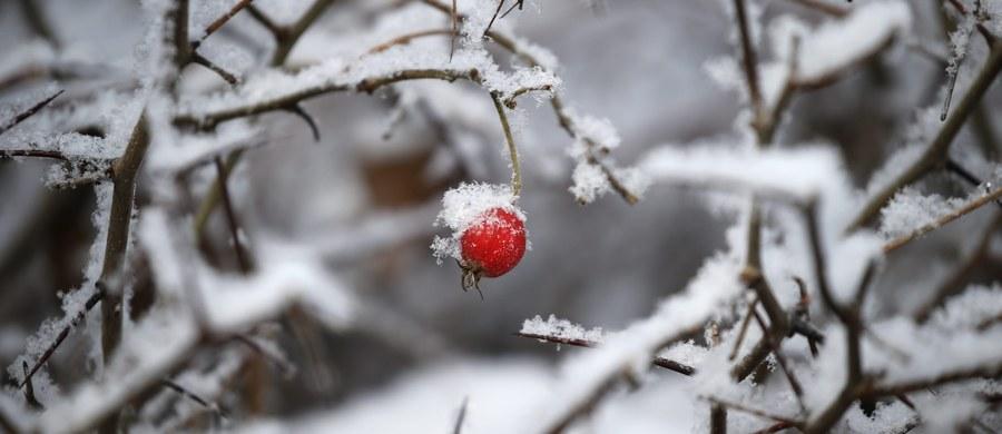 Napływający do Polski front atmosferyczny sprowadzi arktyczne powietrze. Przybędzie też białego puchu. Najintensywniej śnieg ma padać na południu Polski.