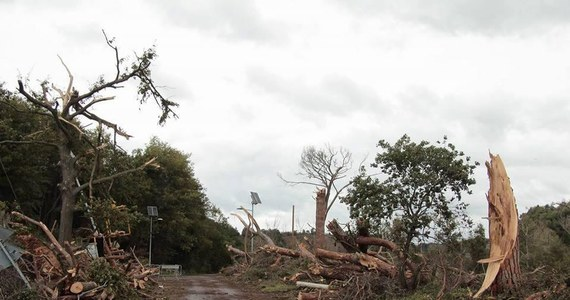 Co najmniej 11 osób zginęło, a 23 zostały ranne na skutek tornad szalejących w amerykańskim stanie Georgia. W siedmiu hrabstwach regionu ogłoszono stan wyjątkowy.