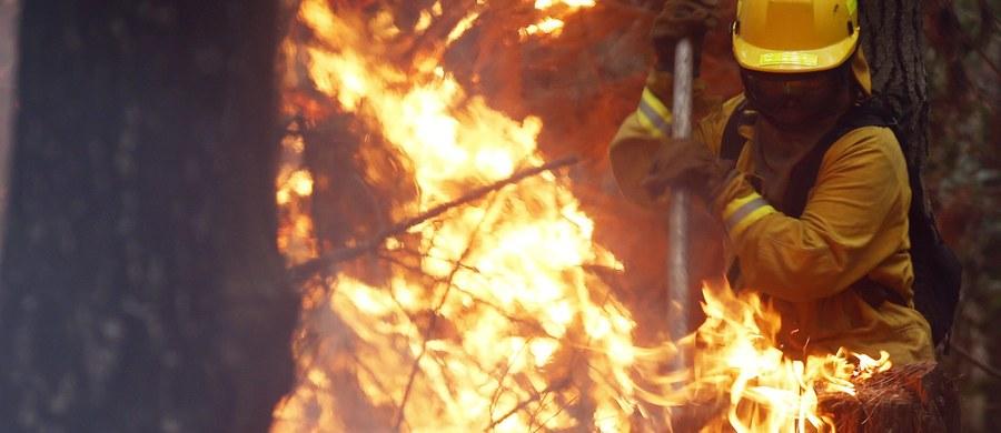 Do 13 osób wzrosła liczba ofiar pożarów w Chile. Walka z ogniem trwa już od czterech tygodni. Ogniska pożaru znajdują się wzdłuż wybrzeża Pacyfiku na przestrzeni blisko ośmiuset kilometrów.