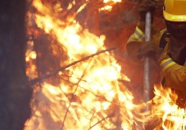 Rośnie liczba ofiar pożarów w Chile. Ogień zniszczył już 1200 domów