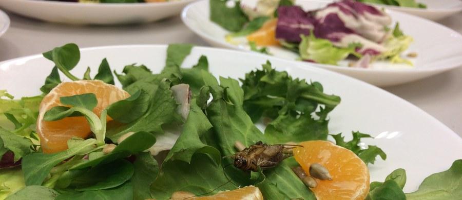 """Deser z larw czy sałatka z szarańczą - tak za kilkanaście lat może wyglądać nasza dieta. Naukowcy z Uniwersytetu Przyrodniczego we Wrocławiu rozpoczęli badania nad żywnością z owadów. Na uczelni ma powstać specjalna hodowla. """"Na świecie ludzie jedzą owady, w Europie mamy z tym ogromny problem. Być może nasze badania pomogą to zmienić"""" - uważają naukowcy."""