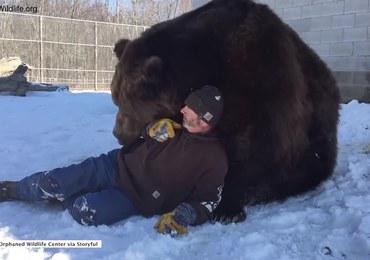 Oswojony niedźwiedź bawi się z człowiekiem