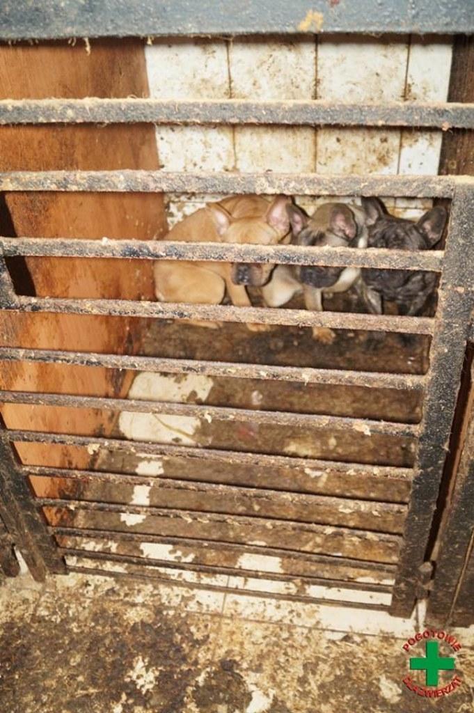 foto. Pogotowie dla zwierząt/Facebook