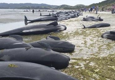 """Kilkaset waleni wyrzuconych na brzeg. """"Jedna z najsmutniejszych rzeczy, jakie widziałem"""""""