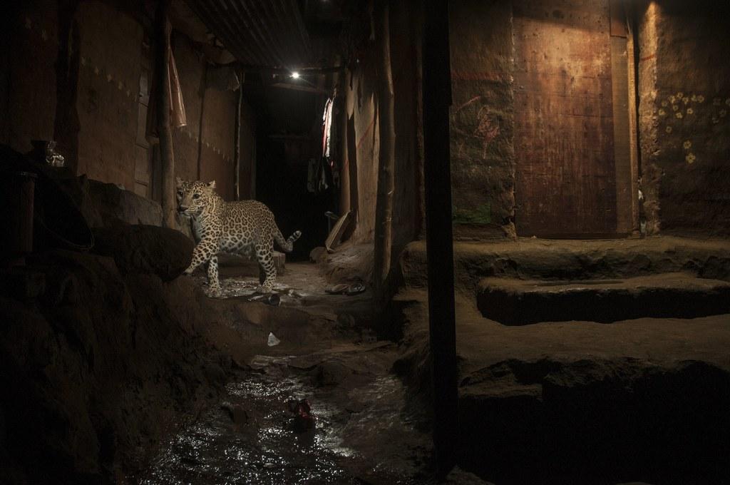 PAP/EPA/NAYAN KHANOLKAR/WORLD PRESS PHOTO HANDOUT