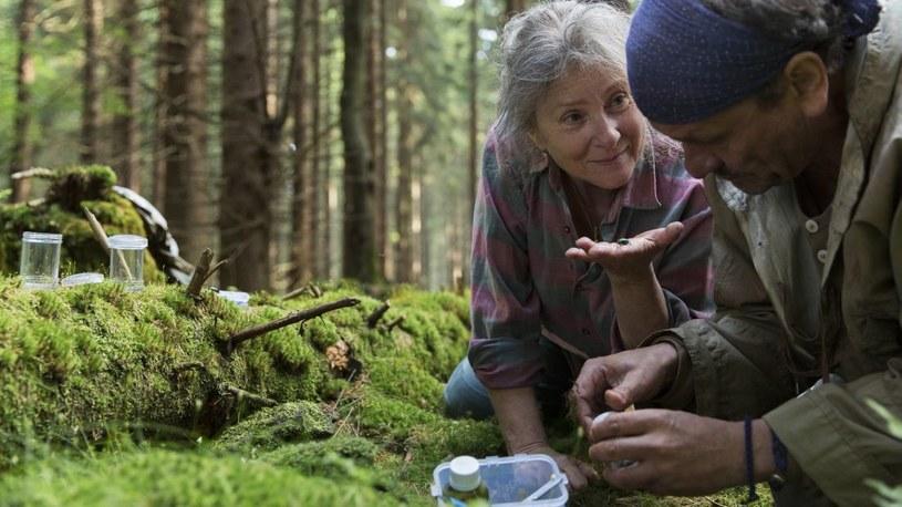 """Olga Tokarczuk w """"Prowadź swój pług przez kości umarłych"""" przeprowadzała dogłębną analizę mentalności emerytowanej miłośniczki zwierząt, wplatając pomiędzy jej przemyślenia wątki sensacyjne. Zaowocowało to książką, która trafiła zarówno do oczekujących kryminału, jak i zwolenników szeroko pojętej literatury pięknej. Jednak filmowa adaptacja powieści w reżyserii Agnieszki Holland może mieć w obu przypadkach trudniejszą drogę. To kontrastowe zderzenie stylów i gatunków, które wstrząsa, wybija z rytmu i prowokuje."""