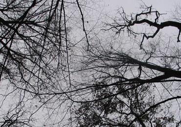 Nowy tydzień w polityce: W dyskusjach na Wiejskiej będą wracały pytania o drzewa