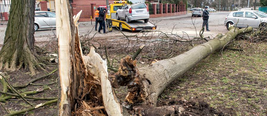 Silny wiatr halny, wiejący na południu Małopolski w nocy z soboty na niedzielę uszkodził dachy na 20 budynkach, wywrócił setki drzew i uszkodził linie energetyczne. Małopolscy strażacy interweniowali niemal 120 razy. Najwięcej zdarzeń związanych z silnym wiatrem było w powiecie tatrzańskim. Silnie wiało również na Śląsku, gdzie strażacy interweniowali około 200 razy.
