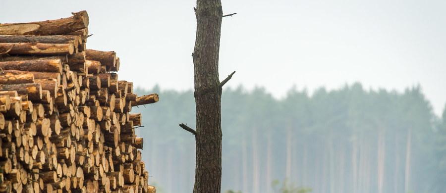 """""""Kontynuujemy prace nad nowelą przepisów dotyczących wycinki drzew; chcemy ją jak najszybciej przyjąć"""" - zapowiada poseł PiS Wojciech Skurkiewicz. Sejmowa komisja środowiska nie zajęła się dziś projektem noweli PiS dotyczącym wycinki drzew na prywatnej działce. Skurkiewicz poprosił o zdjęcie tego punktu z porządku obrad, gdyż - jak podkreślił - wymaga on doprecyzowania."""