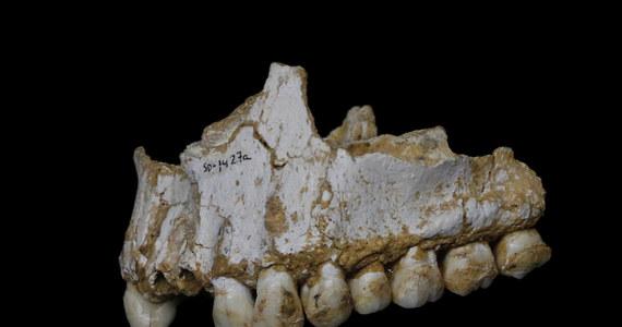 """Badania DNA pobranego z płytki nazębnej europejskich Neandertalczyków pokazały, że nasi bliscy, choć wymarli krewni odżywiali się różnorodnie i mieli podstawową wiedzę medyczną, która pozwoliła im stosować naturalne medykamenty. Badacze z Australii i Wielkiej Brytanii piszą na łamach czasopisma """"Nature"""", że o ile dieta Neandertalczyków z terenu obecnej Belgii była głównie mięsna, ich pobratymcy z rejonu Hiszpanii okazali się raczej wegetarianami."""