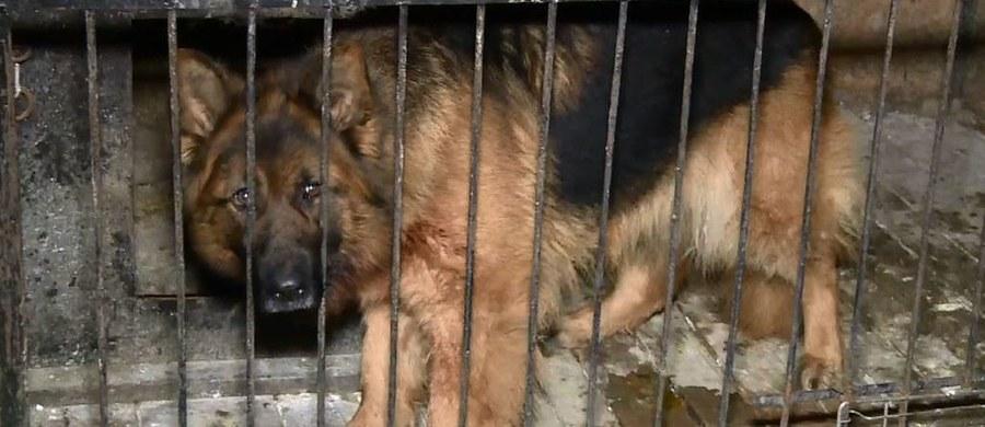 Zarzut narażenia na utratę życia lub zdrowia usłyszał mieszkaniec wielkopolskiego Dubina. W piątek jego pies przegryzł ogrodzenie i pogryzł sześciolatka.
