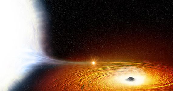 """Wiemy, że czarne dziury to obiekty o tak silnej grawitacji, że nic, nawet światło, nie jest w stanie z nich uciec. Międzynarodowy zespół astronomów pokazał, jak bardzo można zbliżyć się do czarnej dziury i... przetrwać. Na łamach czasopisma """"Monthly Notices of the Royal Astronomical Society"""" opisują układ podwójny, w którym biały karzeł okrąża czarną dziurę w odległości zaledwie 2,5 raza większej niż odległość Księżyca od Ziemi. Jeden obieg zajmuje mu... niespełna pół godziny."""