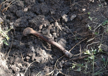 Meksyk: Ponad 250 czaszek w masowych grobach