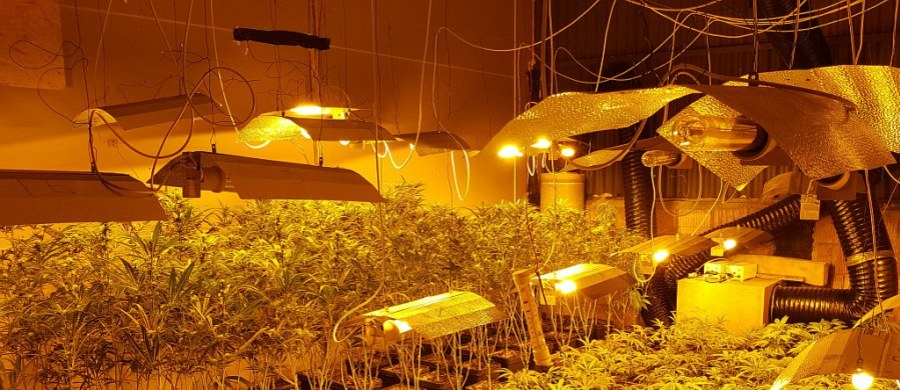 Policjanci zlikwidowali kolejną nielegalną uprawę konopi indyjskich. W dwóch miejscach zabezpieczyli łącznie ponad 6 tysięcy roślin konopi oraz blisko 215 kg marihuany. Czarnorynkową wartość zabezpieczonych narkotyków szacuje się na ponad 10 milionów złotych. Funkcjonariusze zatrzymali trzech obywateli Wietnamu.