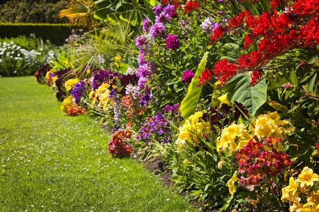 Posadź te rośliny w ogrodzie, a pozbędziesz się komarów