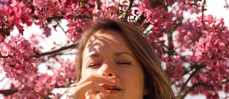 Wiosna to nie jest dobry czas dla alergików. Jak ostrzega w rozmowie z RMF FM dr Marcel Mazur z Centrum Alergologii Klinicznej i Środowiskowej Szpitala Uniwersyteckiego w Krakowie, pyłki dopadną nas wszędzie. Nie tylko na wsi, na łonie natury. W mieście także.