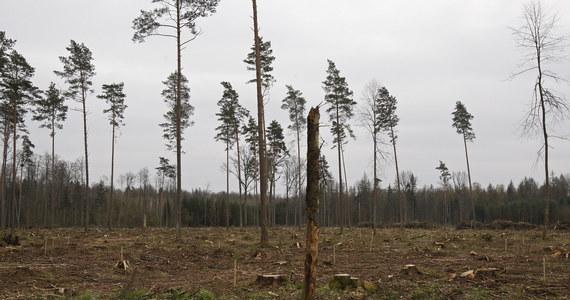 Polska może odpowiedzieć przed Trybunałem Sprawiedliwości Unii Europejskiej za wycinkę drzew w Puszczy Białowieskiej. Jak donosi korespondentka RMF FM Katarzyna Szymańska-Borginon, Komisja Europejska jeszcze w tym tygodniu przejdzie do ostatniego etapu procedury o naruszenie unijnego prawa.