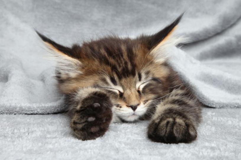 Koty to bardzo wrażliwe i wymagające zwierzęta. Żeby były zdrowe, zadbane i pełne energii, powinny dostawać zbilansowane pożywienie, które zaspokoi wszystkie potrzeby ich organizmu. Sprawdźcie, jak karmić ulubieńca, aby mruczał z radości.