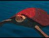 Zobacz trailer: Czerwony żółw