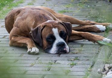 """Ktoś truje psy w Zakopanem. """"Wrzuca trutki nawet do ogrodów"""""""