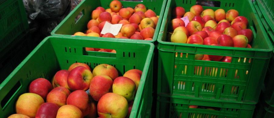 Tegoroczne zbiory wszystkich gatunków owoców będą niższe niż w poprzednich latach, a ceny skupu i detaliczne wzrosną - uważa szef Towarzystwa Rozwoju Sadów Karłowych prof. Eberhard Makosz. Jego zdaniem, uszkodzenia roślin sadowniczych na skutek majowych mrozów są duże.